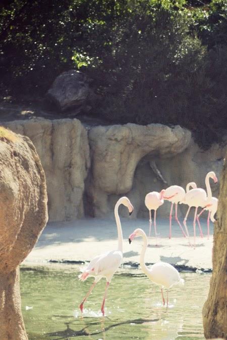 Safari urbain au coeur du Bioparc de Valencia - Espagne