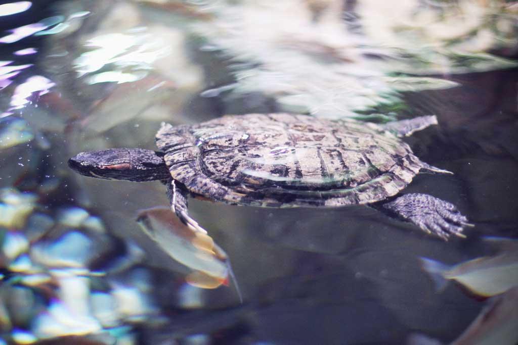 Aquarium-Dubai-02