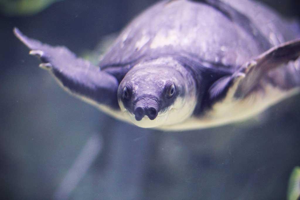Aquarium-Dubai-06
