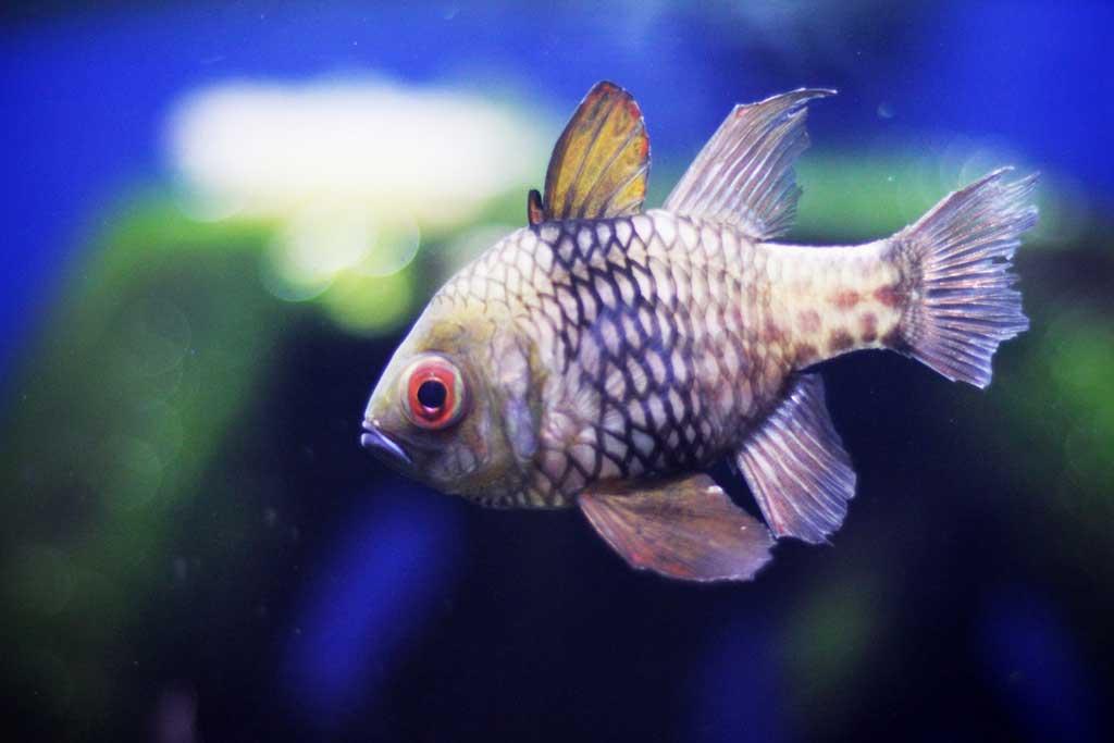 Aquarium-Dubai-09