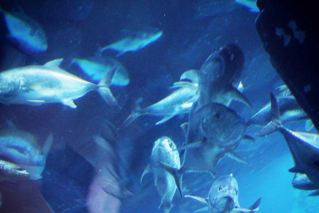 Aquarium-Dubai-23
