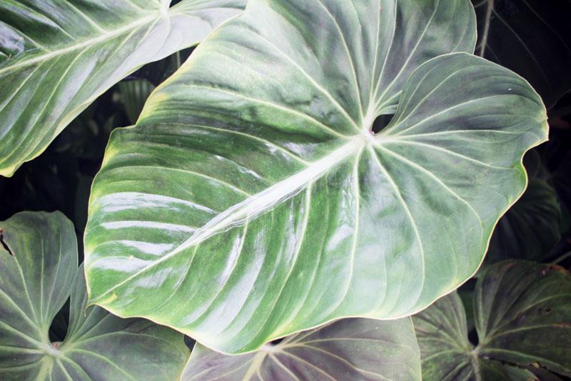 jardin-botanique-guadeloupe-deshaies-07