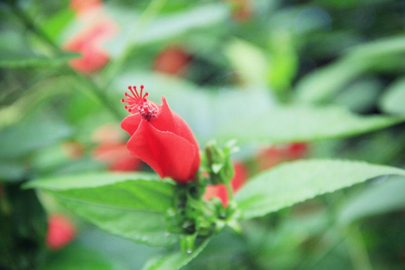 jardin-botanique-guadeloupe-deshaies-14