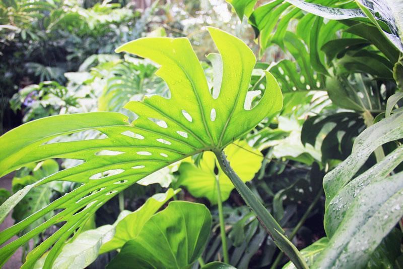 Jardin botanique de deshaies ou le paradis tropical de la for Jardin tropical guadeloupe