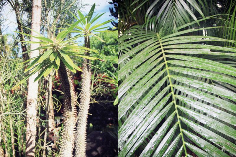 jardin-botanique-guadeloupe-deshaies-2-02