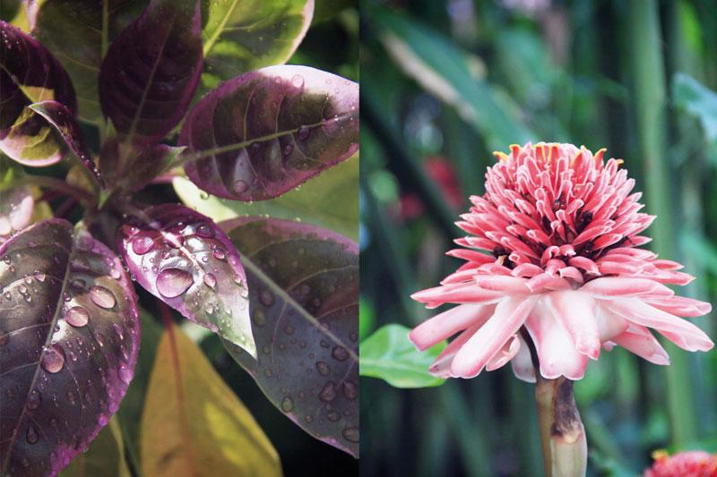 jardin-botanique-guadeloupe-deshaies-2-05
