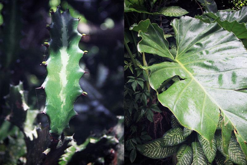 jardin-botanique-guadeloupe-deshaies-2-08