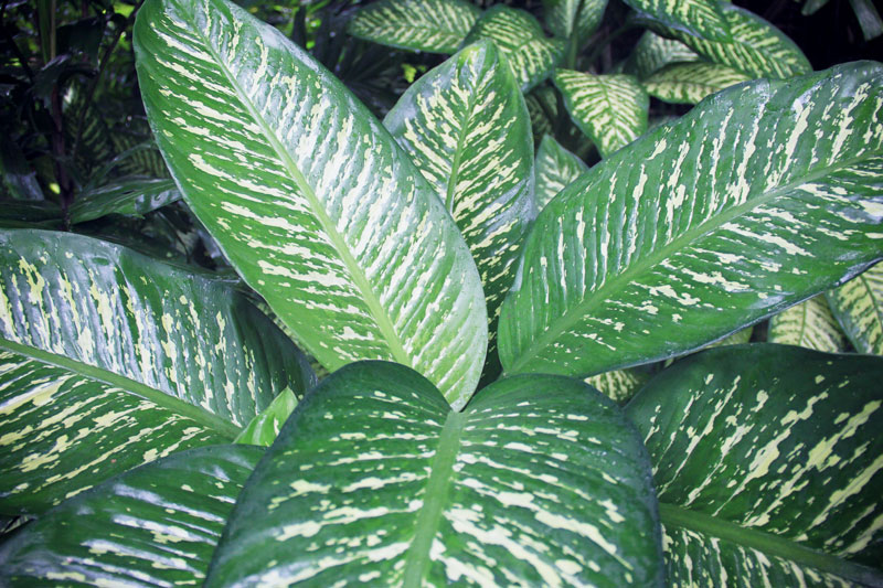 jardin-botanique-guadeloupe-deshaies-28
