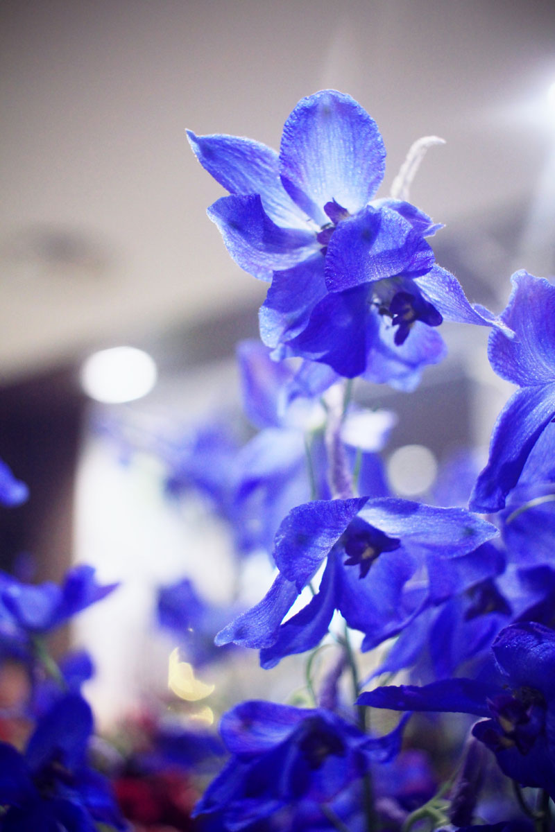 Oya-fleurs-05