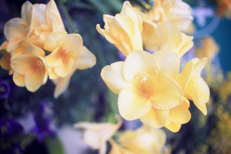 Oya-fleurs-07