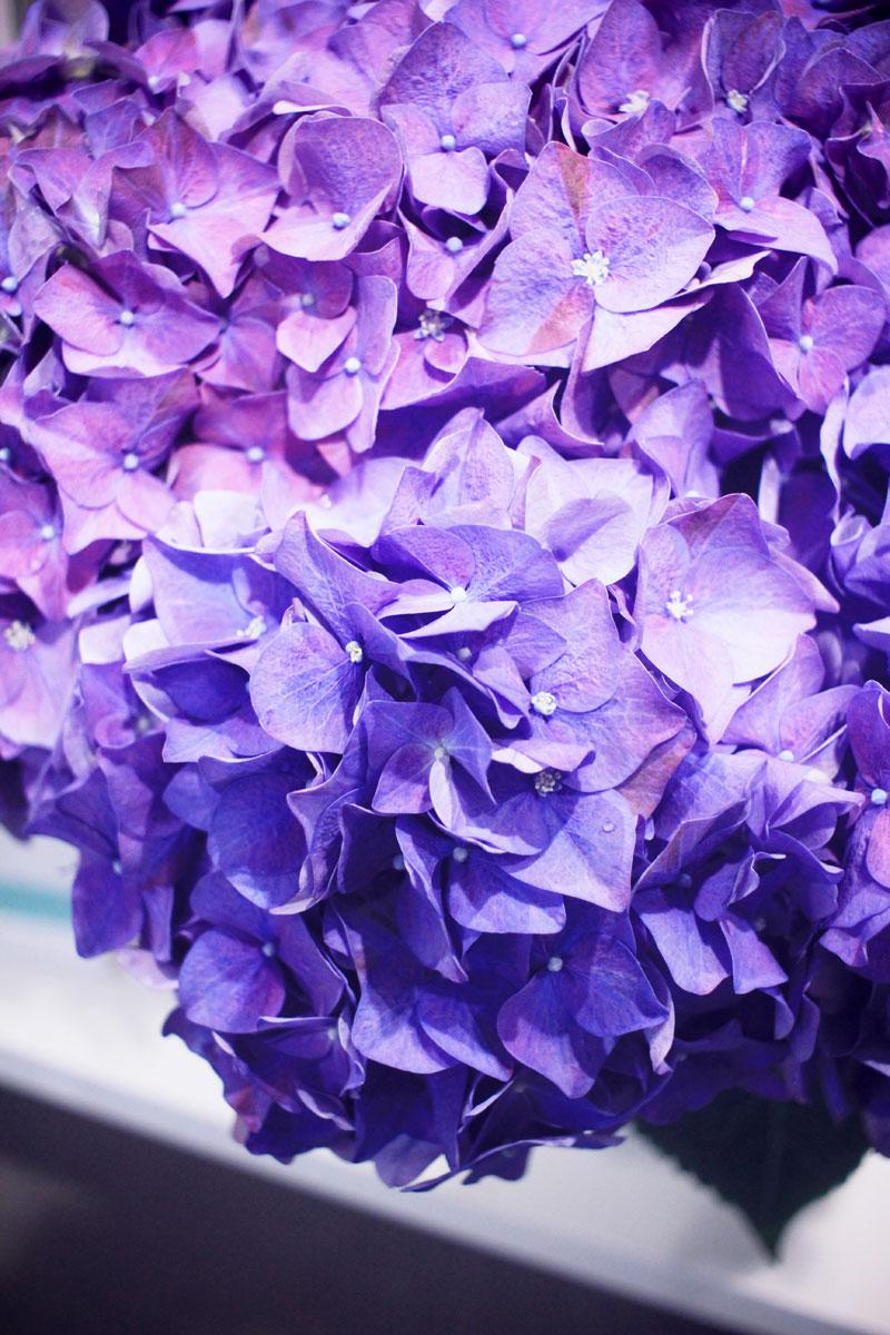 Oya-fleurs-10