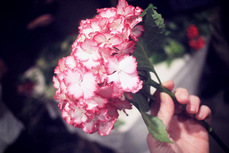 Oya-fleurs-18